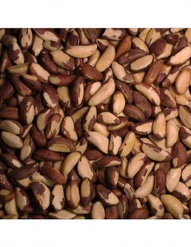 Brazil Nuts Bulk Sale